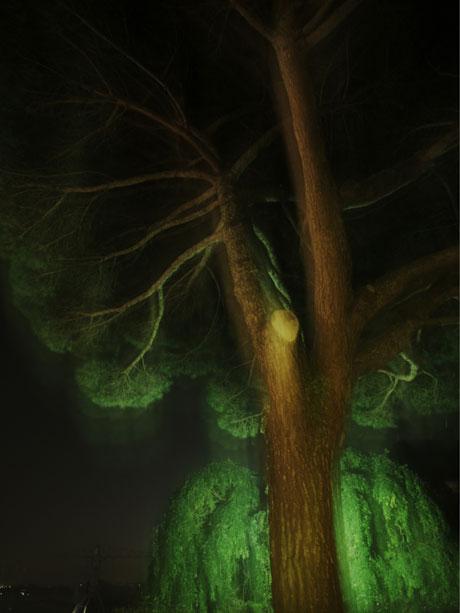 arbre-hante-butte-sainte-annne
