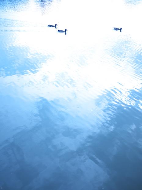 Balade le long de l'eau à Sucé-sur-Erdre