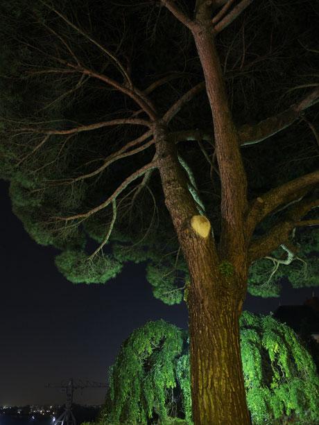 arbre-nuit-butte-sainte-anne